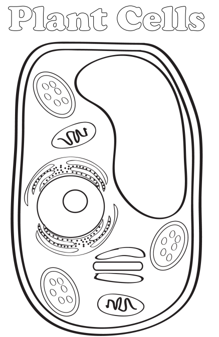 plant cell unlabeled black and white